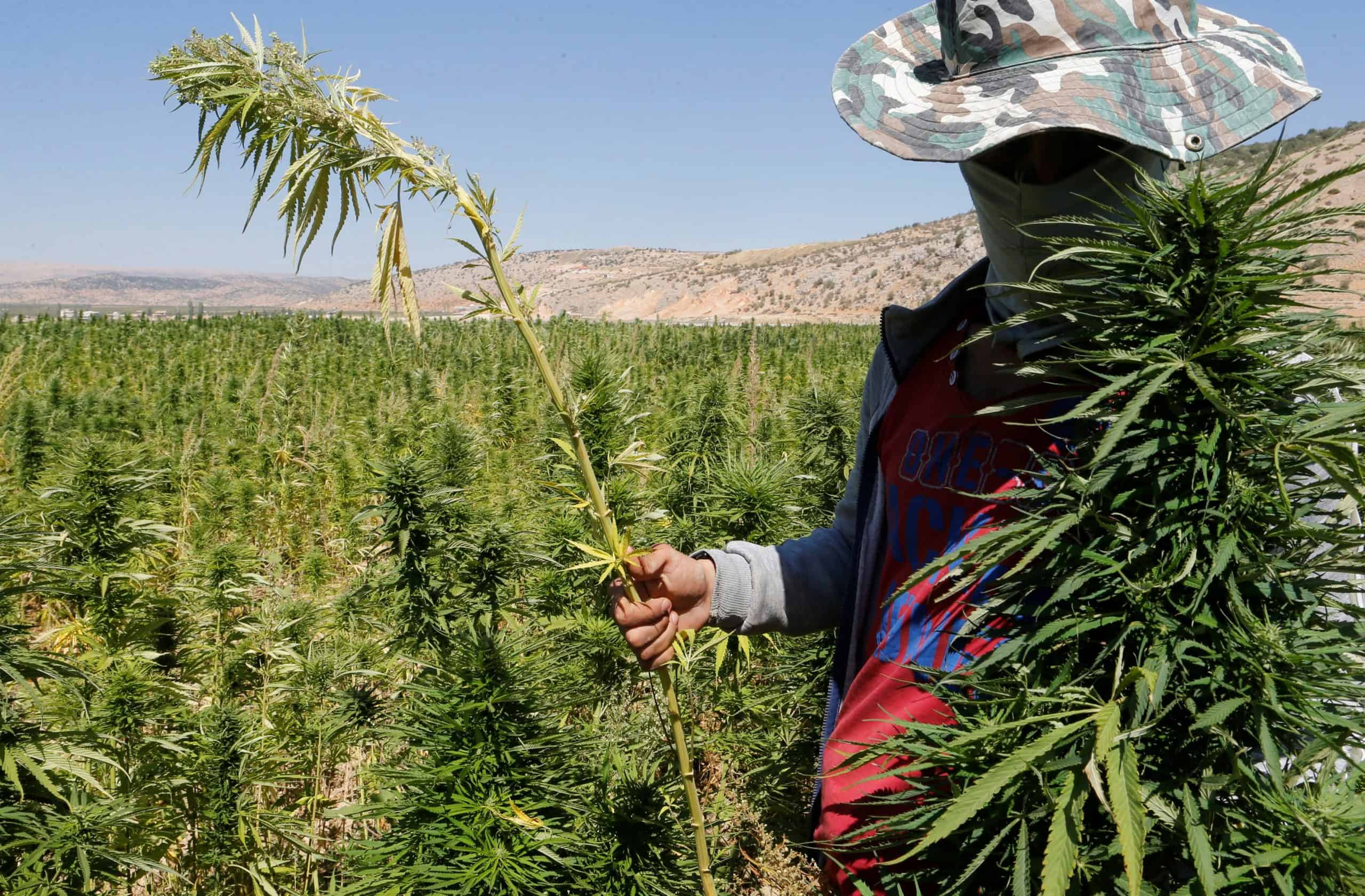 Risks and Opportunities of Medical and Industrial Cannabis legalization in Lebanon
