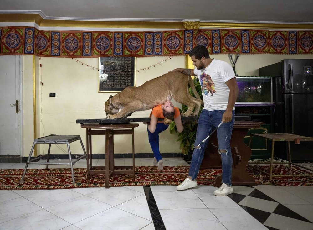 Living Room Circus Lion Show Encourages Egyptians to Stay Home