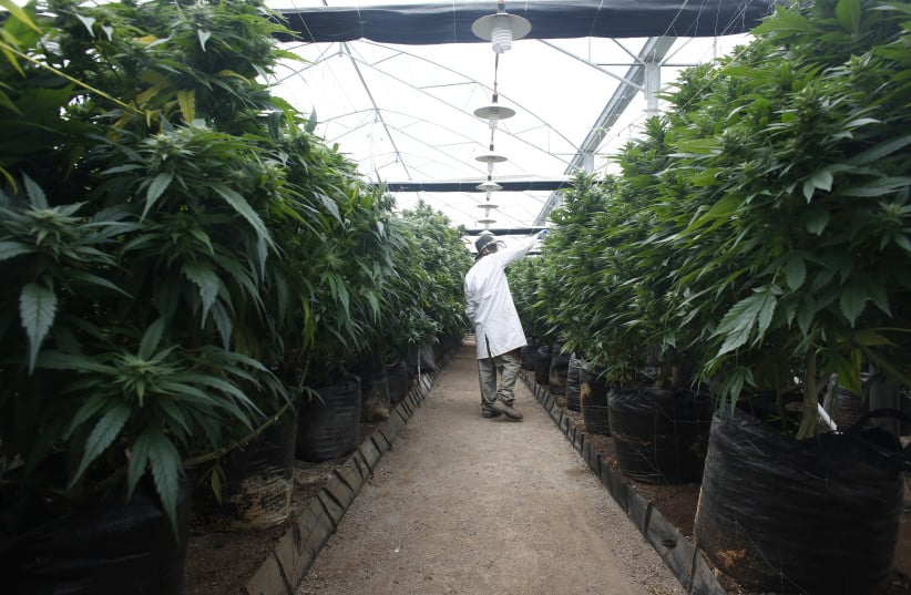 Israel Green-lights Medical Marijuana Exports