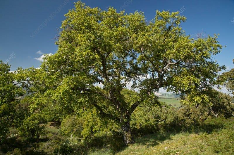 Illegal Logging Surges in Locked-Down Tunisia